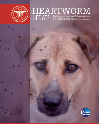 Cover of Hearworm update with a dog and mosquitoes